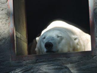 V Praze kladou důraz na pohodu zvířat