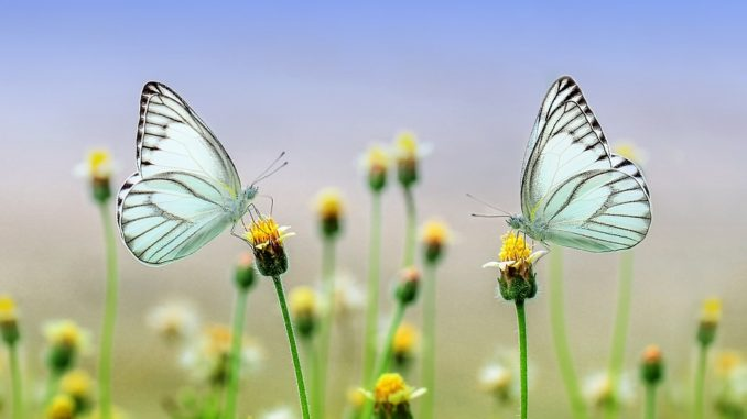 Za exotickými motýly do skleníku Fata Morgana