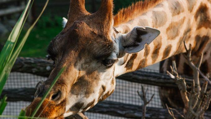 Pražská zoo plná úspěchů. Co zoo dokázala v loňském roce?
