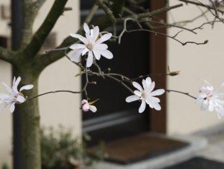 V Praze opět vypukne pražské jaro