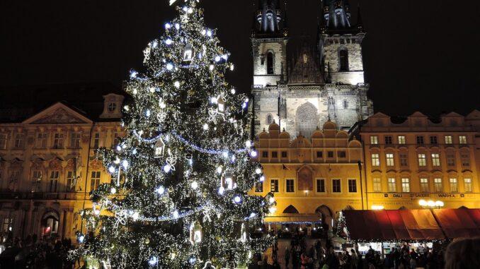 Hledání vánočního stromu je odstartováno